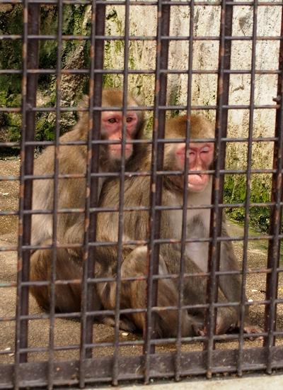 250511 動植物園7