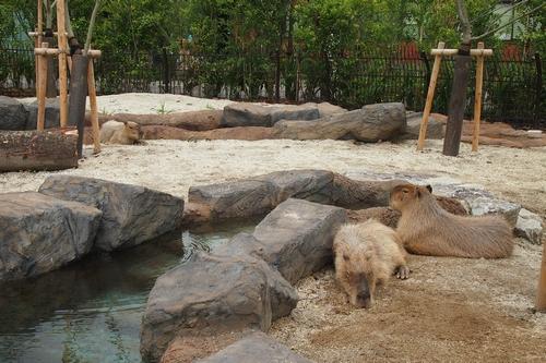 250511 動植物園15