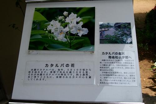 250515 徳富記念園5