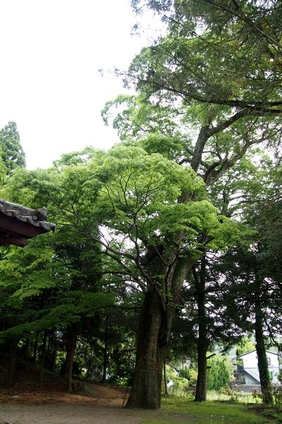 250516 卯添阿蘇神社14