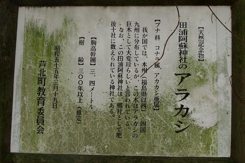 250404 田浦阿蘇神社16