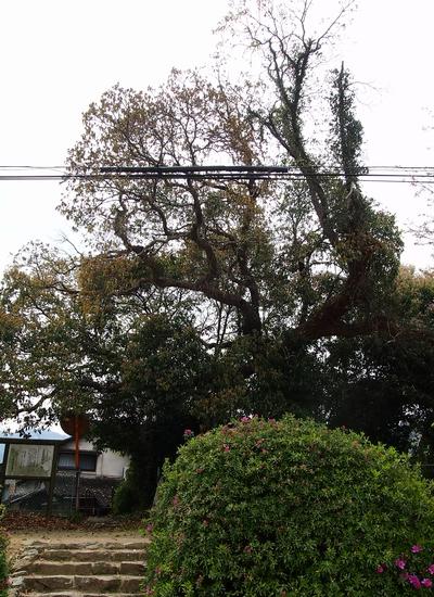 250404 田浦阿蘇神社19