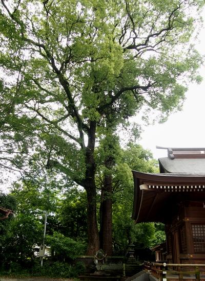 250630 北宮阿蘇神社21