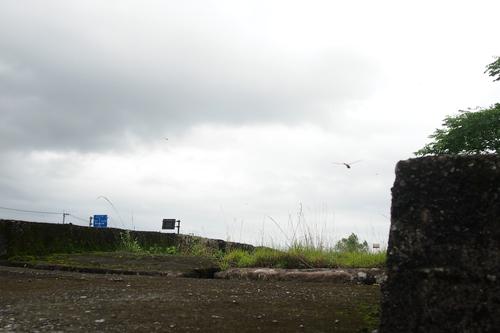250704 井樋橋7