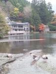 金鱗湖 (113x150)