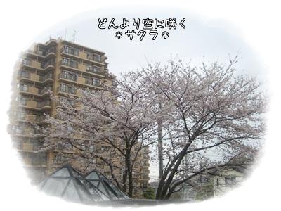 CIMG9650.jpg