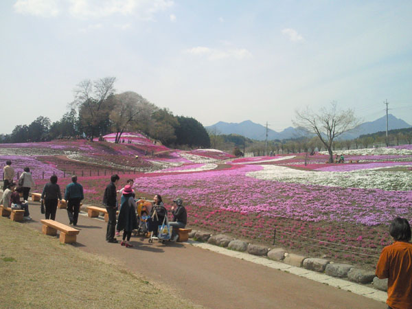 箕輪 芝桜公園