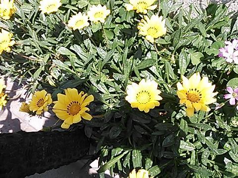 花とアイス 002