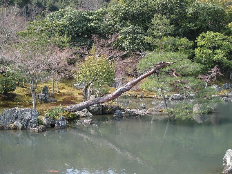 天竜寺の庭