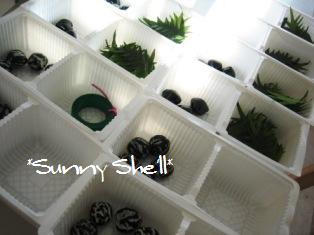 tray201112.jpg