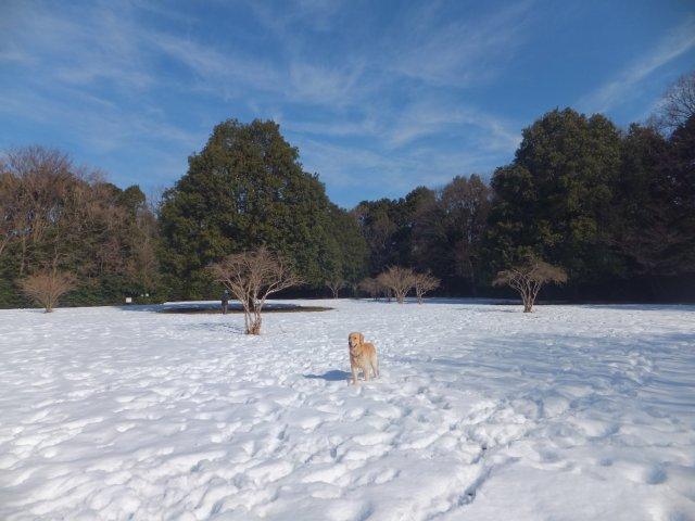 東高根森林公園の雪