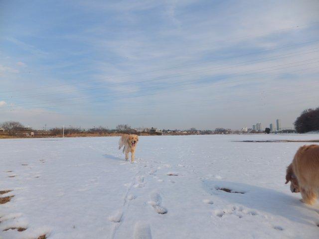 多摩川河川敷の雪