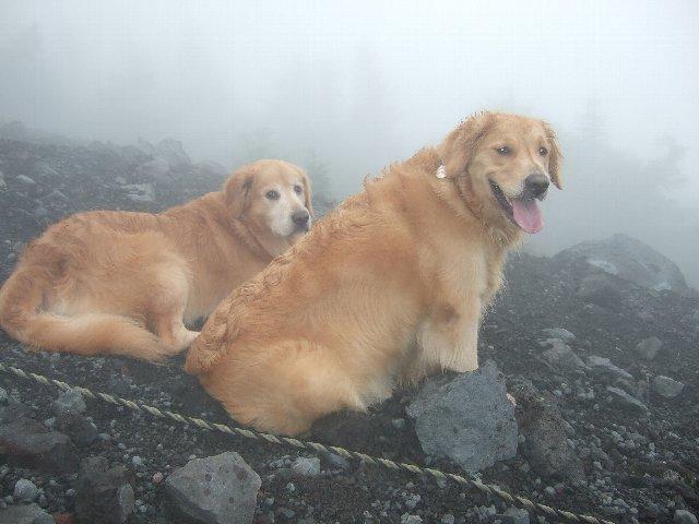 始めての富士山ルークとリオ
