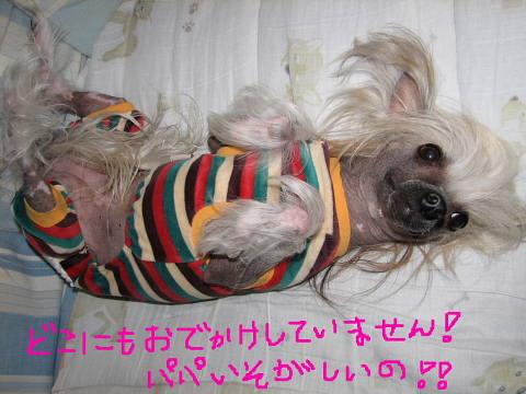conv0004_20121124202407.jpg