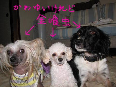conv0028_20121103203651.jpg