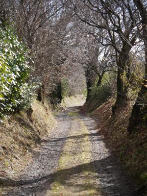 里山の小道