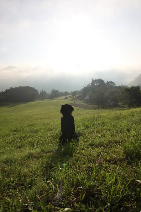 2010キャンプの朝