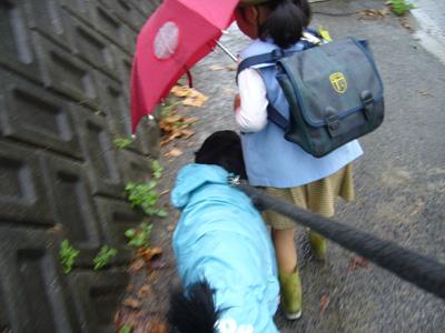 雨の日ぽぽる