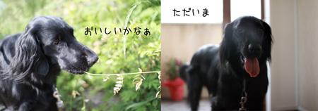 2011朝3