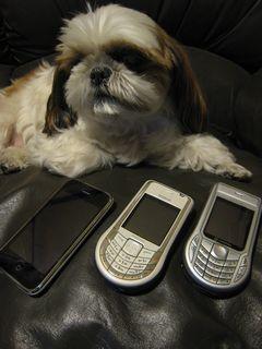 リリーくんと携帯