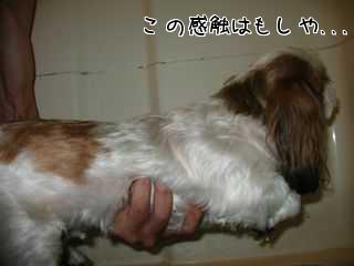 愛犬とお風呂