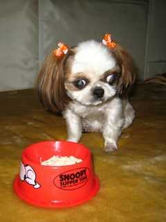 愛犬の食欲