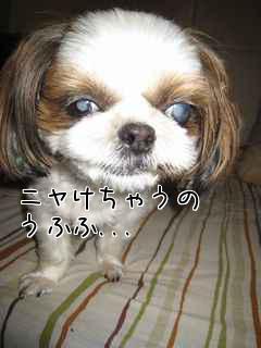 愛犬とトンカツ