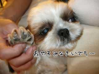 愛犬の甘え