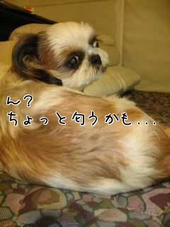 愛犬のトラウマ