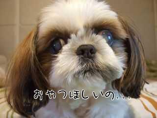 お犬さんオンチ