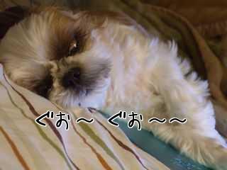 愛犬の寝つき