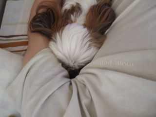 愛犬の不思議な行動