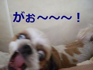 トラ・虎・寅?