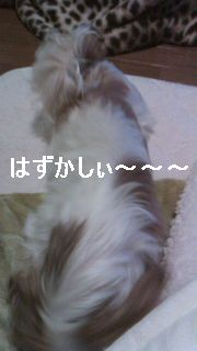 20110229d.jpg