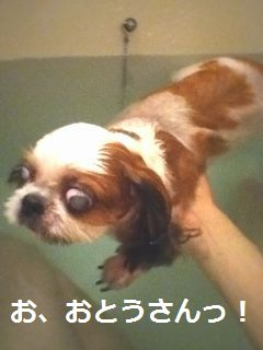 今日の入浴剤は...。