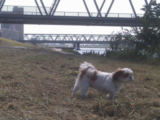 江戸川へ...。