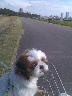 江戸川へ...2