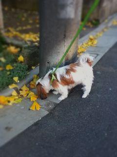 今は散歩もせがむくらいですm(_ _)m