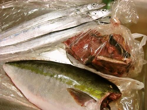 メジロ・太刀魚