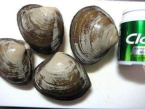1-20 ほっき貝