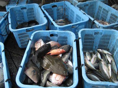 3-7 いろいろな魚