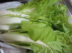 12-7 山東菜