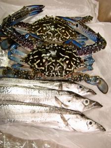 ワタリガニと太刀魚