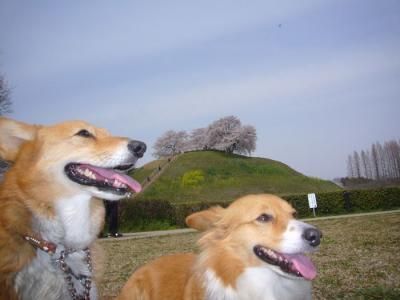 10日古墳公園1