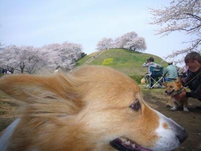 10日古墳公園3