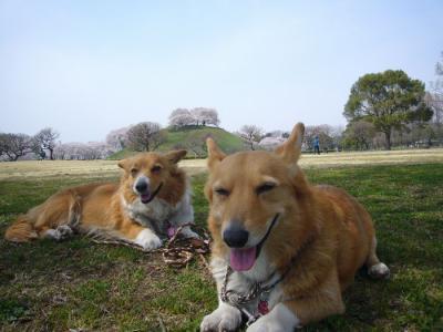 10日古墳公園4