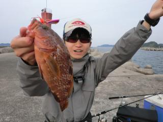 僕・・・アコウ釣りたいです・・・釣っとるがな!!!