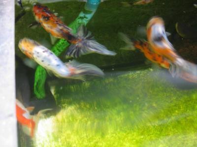 けふの院魚