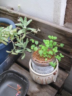 ペットボトルで種から栽培するキット