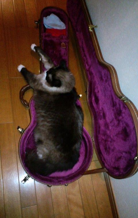 アンソニギター